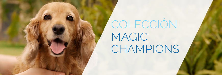 coleccion-boradados-magic-champions